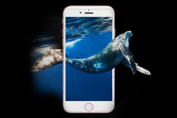 Bridge94 iPhone 6/7/8 Bildschirm-/Display-Schutzglas gehärtet
